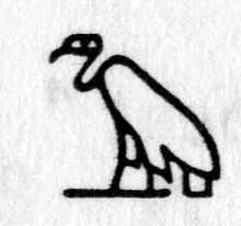 Hieroglyph tagged as: bird,vulture